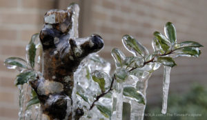 Ice forming on plant
