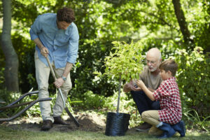 Three generation male family gardening together in park