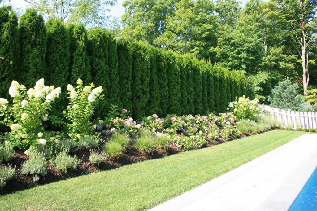 Large hedges behind flowers