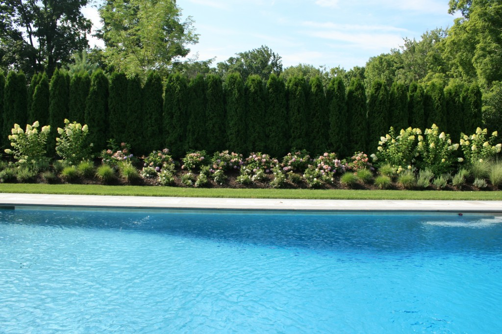 Pool with large hedges and flowers behind