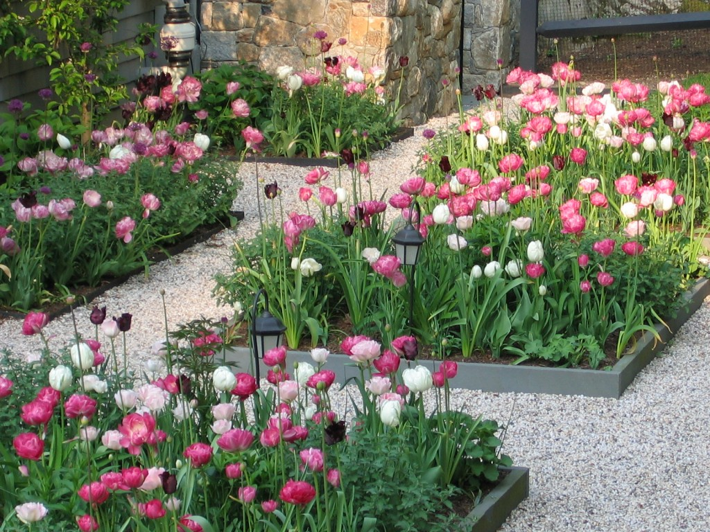 Pink and white flowers in flower beds