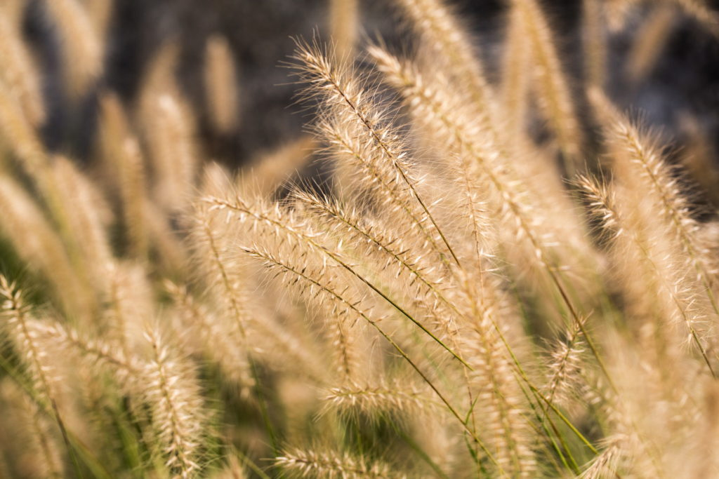 Turkey-Hill-Westport-1011
