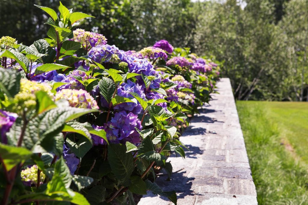 Turkey-Hill-Westport-CT-16-1190