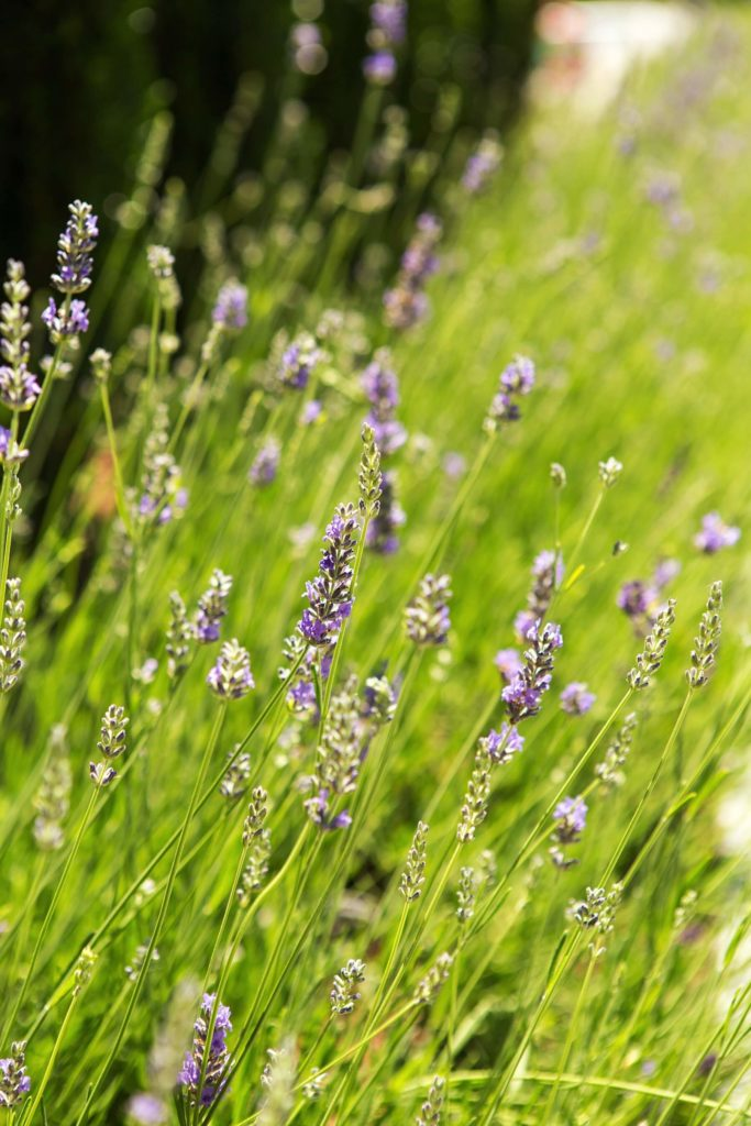 Turkey-Hill-Westport-CT-28-1373