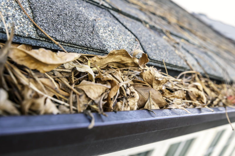 clogged gutters lead to damaged lawns