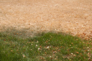 heat damaged lawn