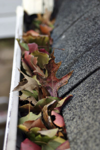 Leaves stuck in gutter