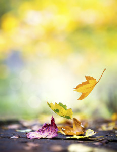 Leaves falling to ground