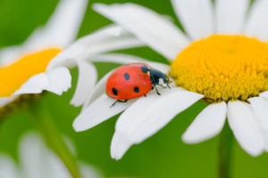 having beneficial insects in your garden can help protect it