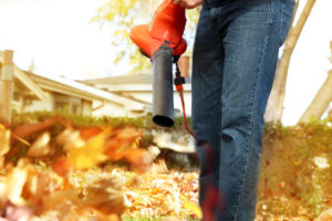 removing leaves from the lawn in the fall