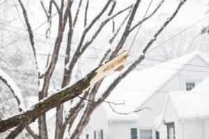 Broken Tree Branch Hanging in Power Line During Snowstorm