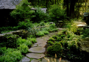 Stone walkway surrounded by plants
